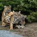 Tigersalat by marionB-fotografie