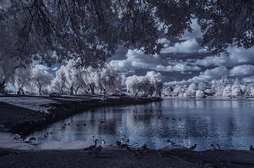 december clouds lindolake lakeside ir infrared infraredphotography convertedinfraredcamera highcontrast nature naturephotography surreal polarizer reflections channelswapping otherworldly