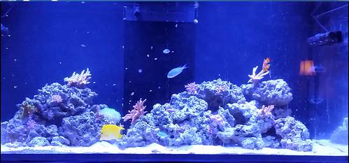 reef tank Dec 2016   by glennmurray560