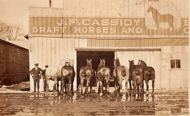 SCN_0001 JF Cassidy Draft Horses Pleasantville Iowa
