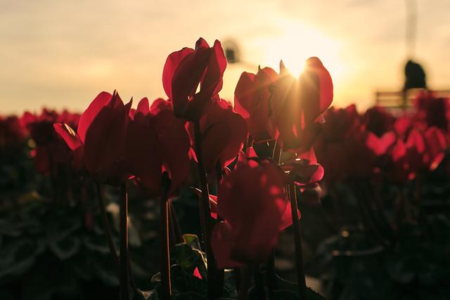 Sunset cambrils