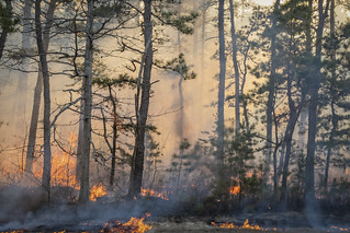 Prescribed burn, New Jersey Pinelands *** | by rich0234