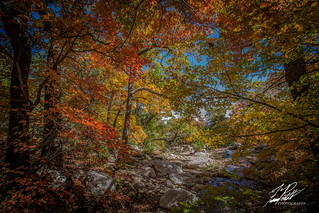 Gallery Forest   by Frank Portillo