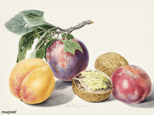 Fruits by Michiel van Huysum (1714-1760). Original from The Rijksmuseum. Digitally enhanced by rawpixel. | by Free Public Domain Illustrations by rawpixel