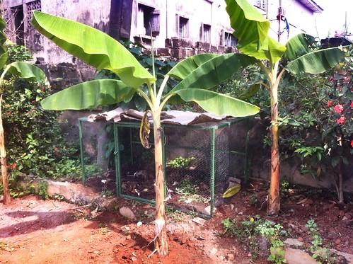 nigeria ibadan snailfarming heliciculture