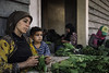 Refugees, hired by Lebanese landowners, dry tobacco leaves in a shack near their makeshift shelter camp.   Photo © Lorenzo Tugnoli for GVC. All rights reserved. Licensed to the European Union under conditions.