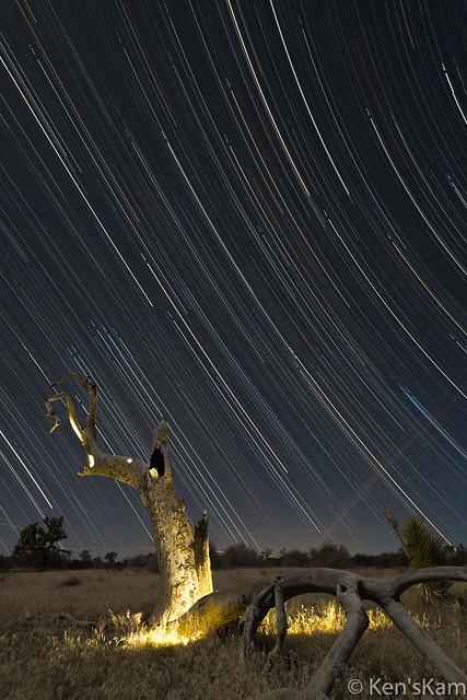 Grim Reaper Tree Star Trails-1