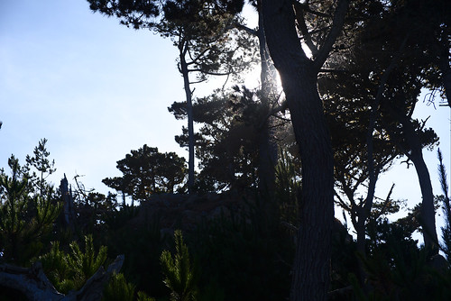 Sunlight, Cannery Point, Point Lobos   by aenigmatēs