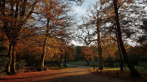 New Forest in Autumn - my favourite place!