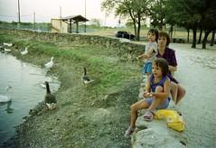 Copperas Cove Ducks