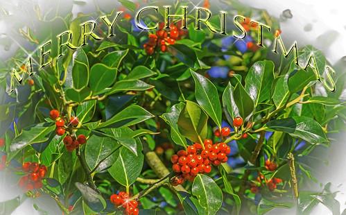 christmas card | by ian-robinson