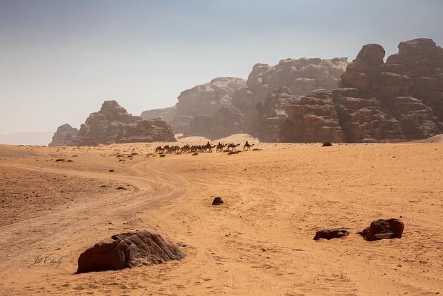 A Caravan of Camels in Wadi Rum