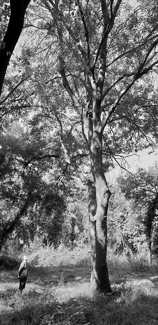 The ash tree is known as the Venus of the woods, and it seems to stir powerful feelings in those who gaze on its graceful form.
