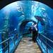 Sea Life Aquarium by Seventh Heaven Photography - (Travel)