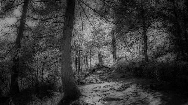 Wood of Light