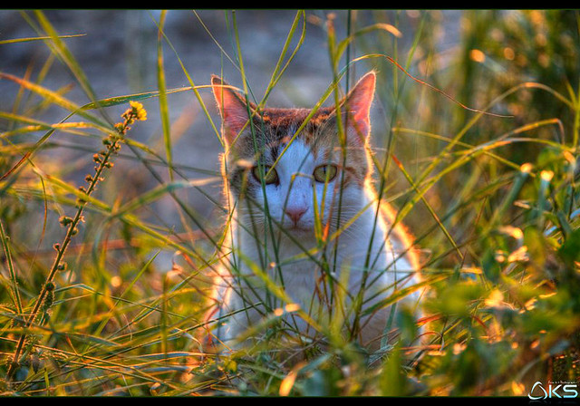 a Cat in Provence
