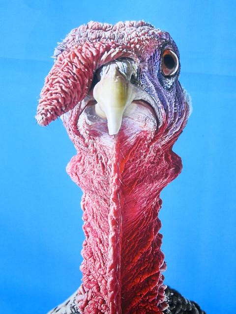 turkeys against eating turkey. TRY SALMON.