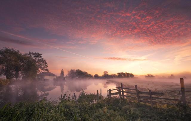 Dawn Glory
