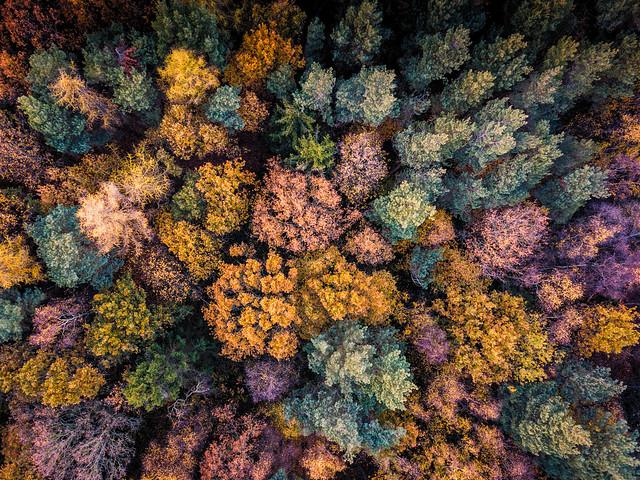 Trent Park Autumn Trees