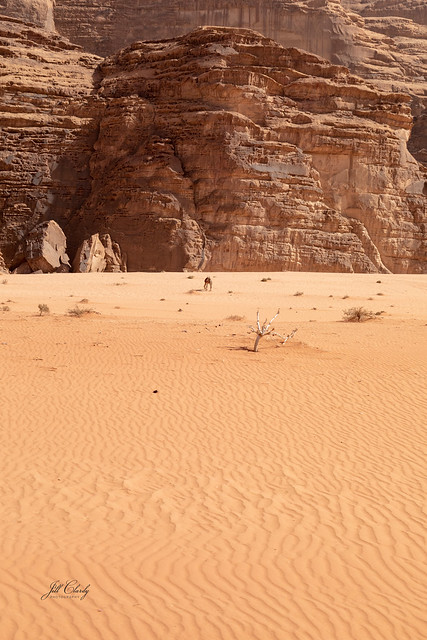 A Sea of Sand in Wadi Rum