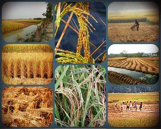Sundarbans village - collage