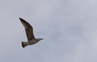 Seagulls and other sea birds   by jamie_okeefe