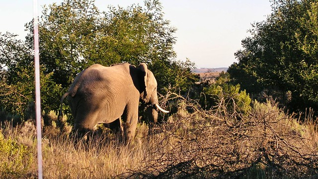 Elefant Lalibela Game Reserve