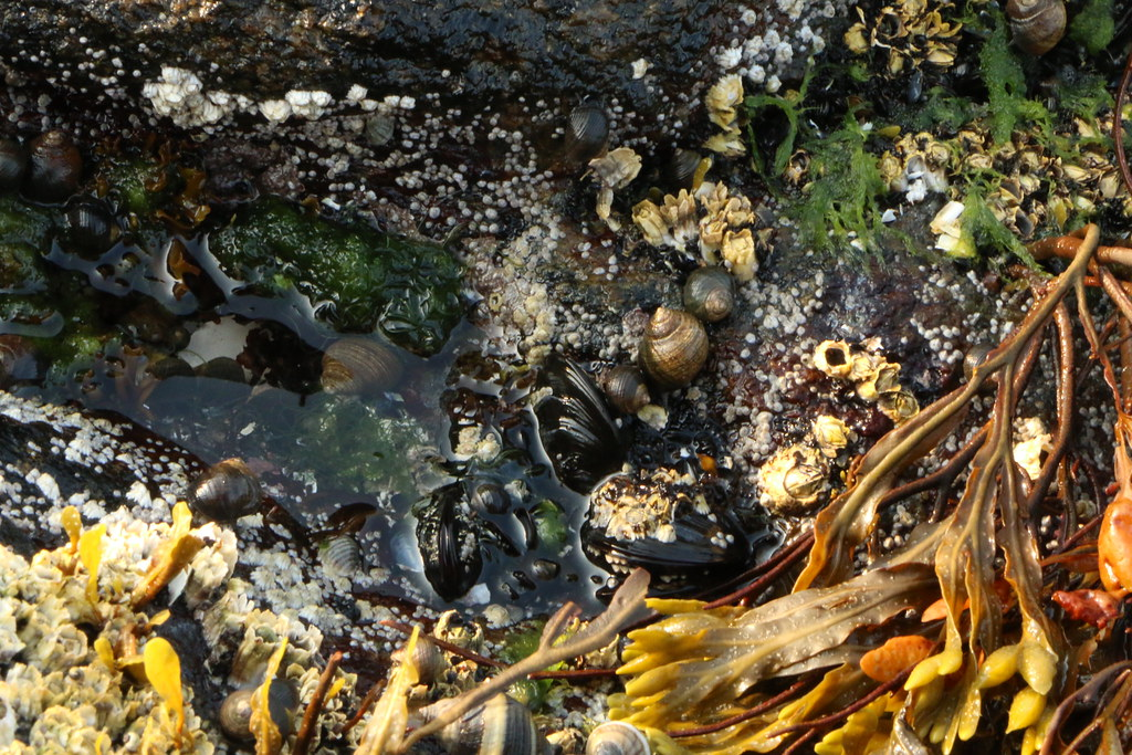 photo of tide pool in New England