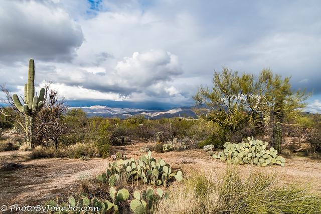 Saguaro NP-8