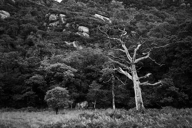 white_tree_L2014147