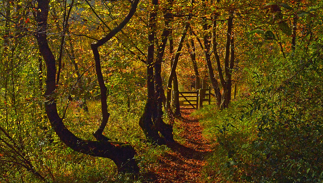 Exuberant Nature, Bix, Oxfordshire, England