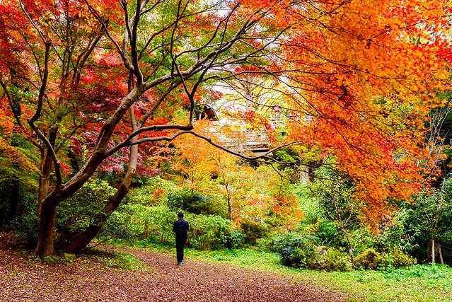 At Todoroki Valley Park of autumn leaves : 等々力渓谷公園
