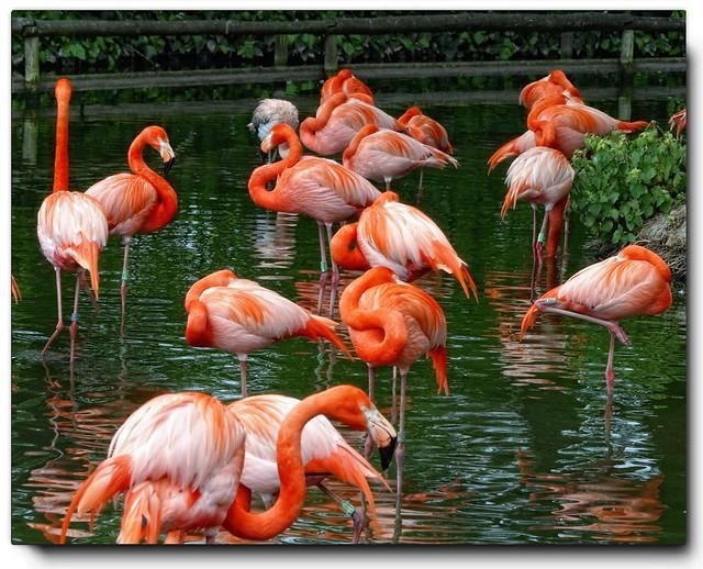 Flamingos..........