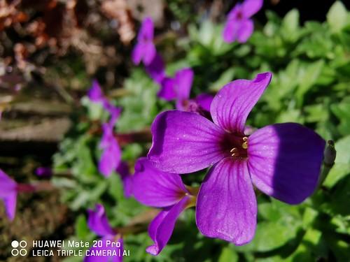 #flower #macro #photography #shot #flowershot #promacro