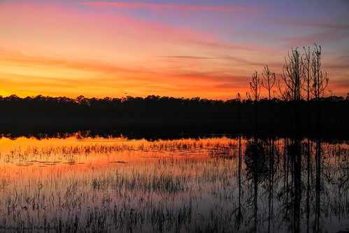 canon florida kathrynlouise seascape landscape sunset sunrise doelake ocalanationalforest silhouette hiking fta floridatrailassoc camping roberthunterlyrics gratefuldeadlyrics bobweir bobbarlow