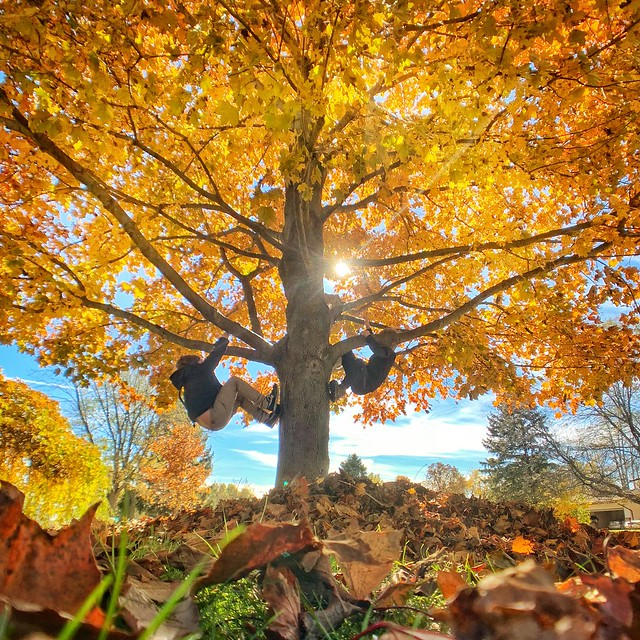 Fall tree monkey's