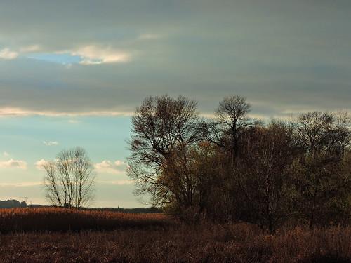 Поздняя осень / Late autumn | by Владимир-61