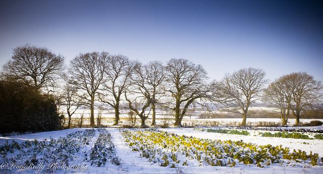 Hampshire in snow-12