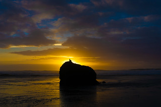 Bird at Bandon Sunset | by tryggphoto.com