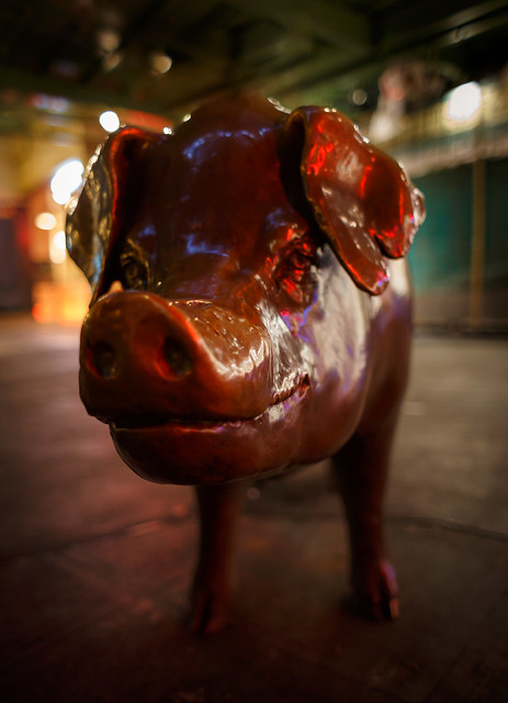 The pig in holiday lights (Explore 12.17.18)