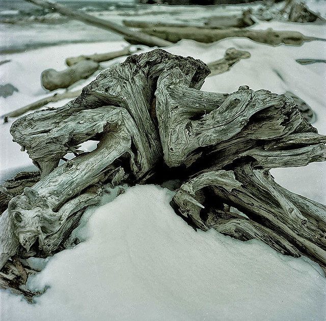 Driftwood in Winter-Lake Superior