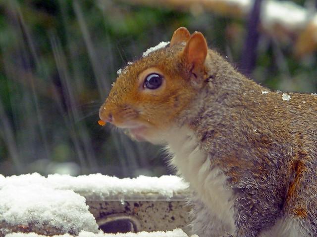 Squirrel Called Stripe!