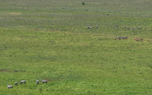 nairobi landscape hartebeest creatures mammals kenya nairobinationalpark wild plainszebraquagga