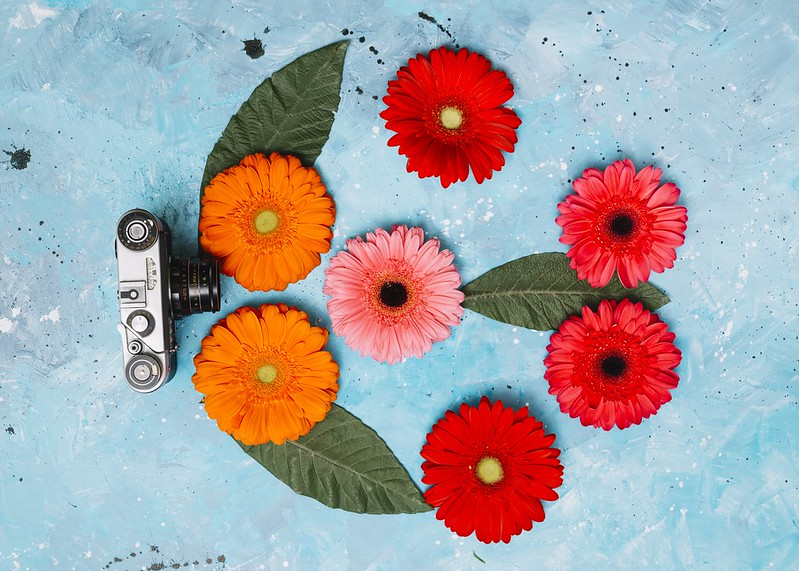 Обои листья, цветы, фон, герберы картинки на рабочий стол, раздел цветы - скачать