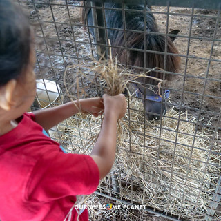 Yoki's Farm 2019-90.jpg | by OURAWESOMEPLANET: PHILS #1 FOOD AND TRAVEL BLOG