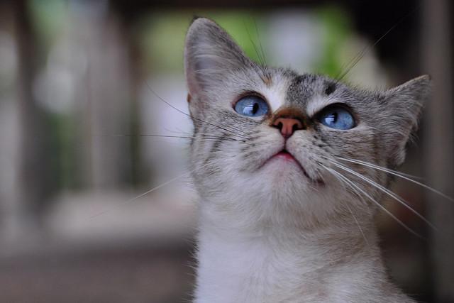 Blue eyed beauty !
