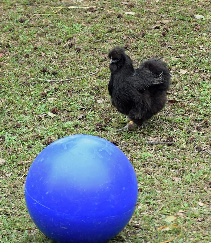 Kick the Ball!