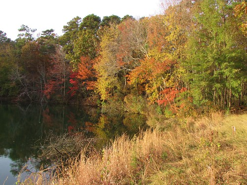 Cliffs of the Neuse State Park (7)