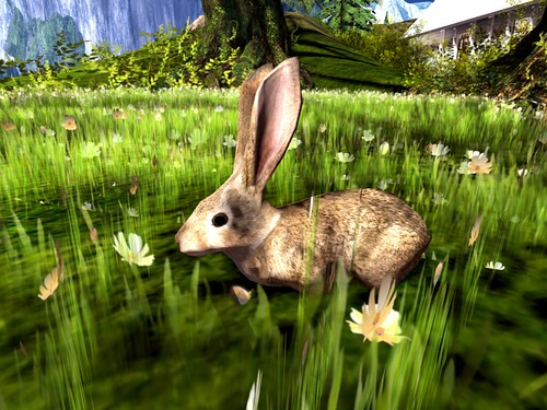 Dimrill Dale  -Bunny Boos Hidden In The Tall Grass | by mromani50