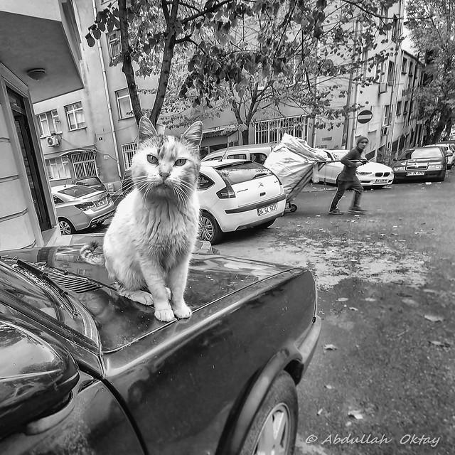 Cat 74